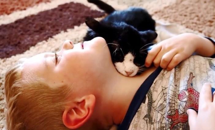 少年に懐く猫
