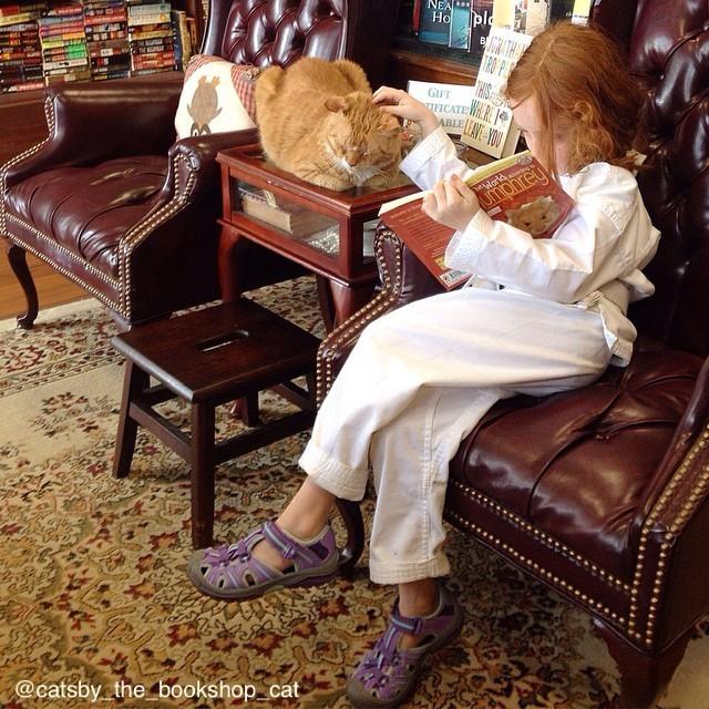 お客さんと過ごす猫
