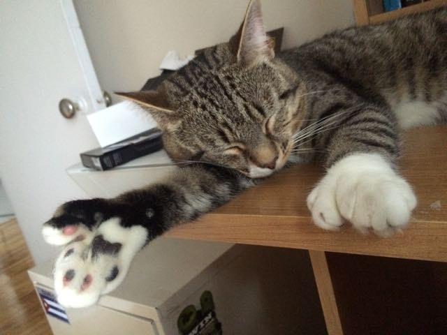 猫の大きな手