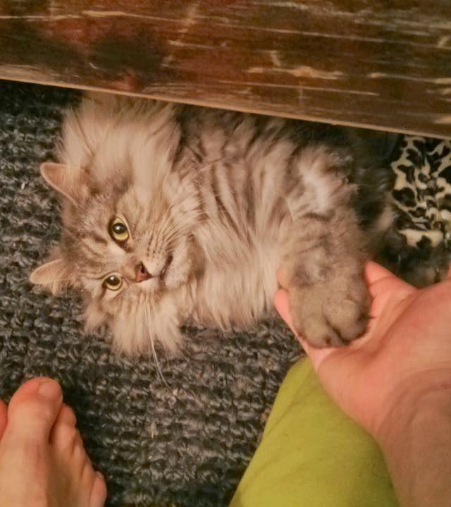 握手する猫