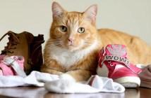 色々なものを持ち帰る猫