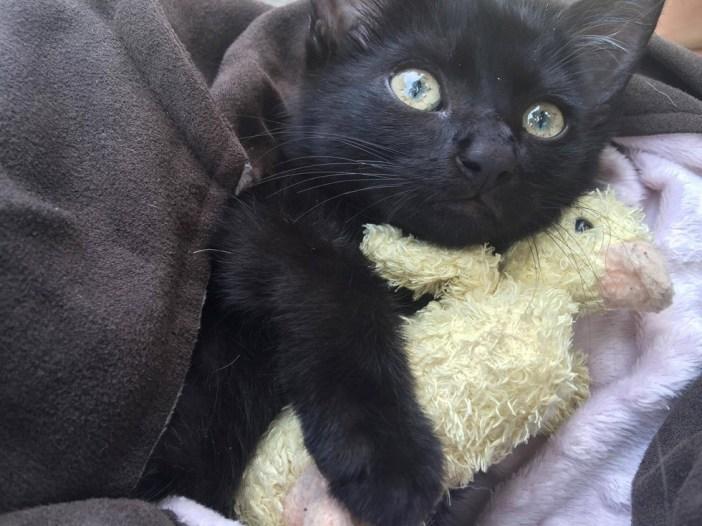 ぬいぐるみを抱っこする子猫