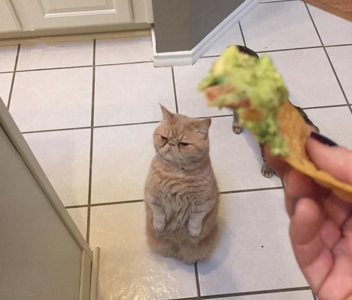 いらない猫
