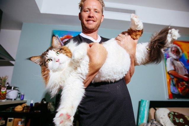 大きな猫を抱き抱える男性