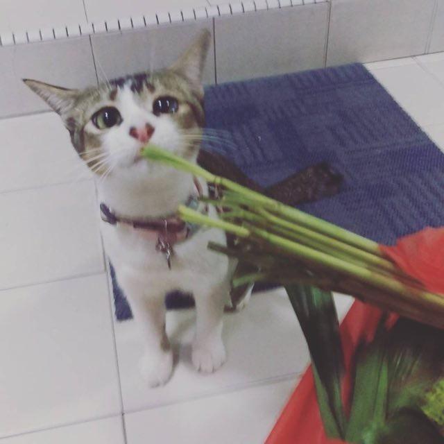 野菜を見る猫