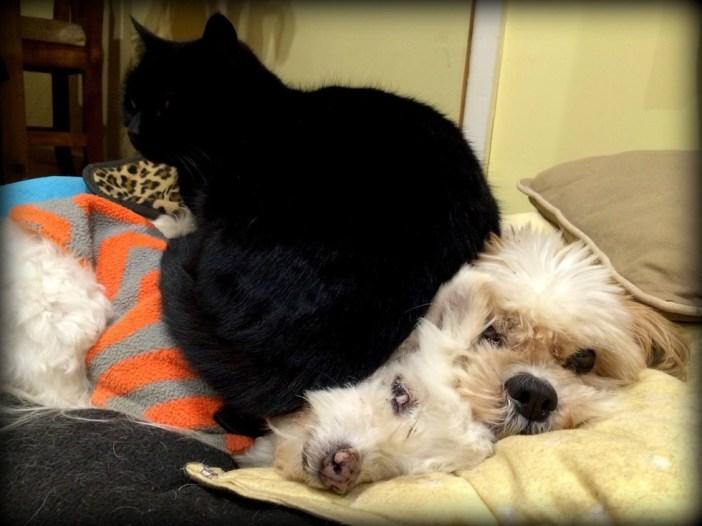 犬に座る猫
