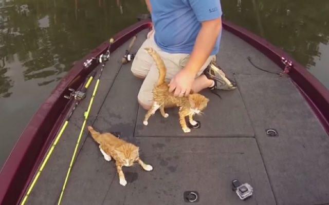 ボートに引き上げられた子猫