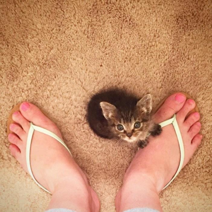 足にくっついてきた子猫