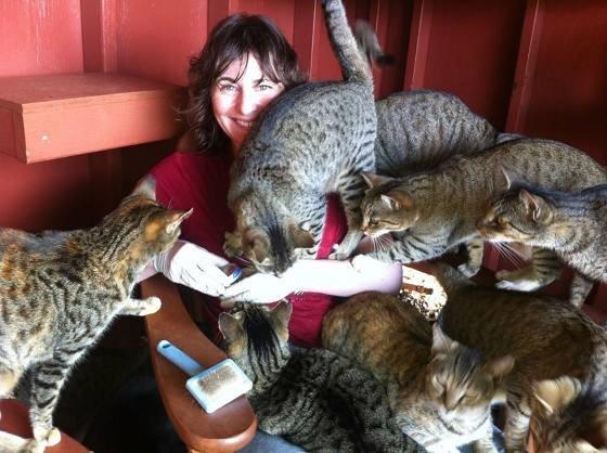 猫に囲まれる女性