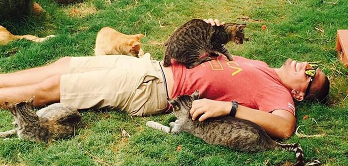 ハワイの猫の保護施設