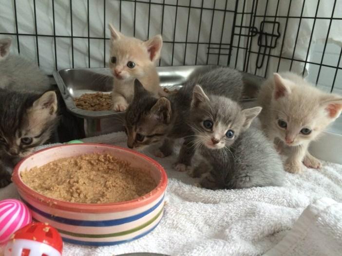 ご飯時間の子猫達