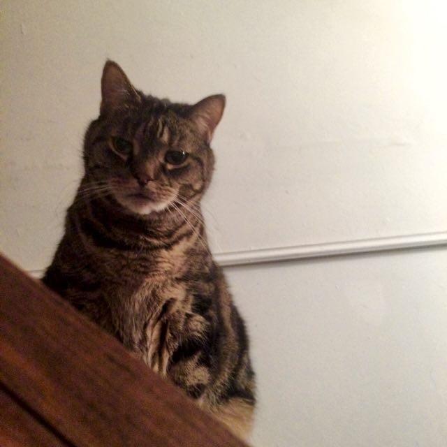 覗いてくる老猫