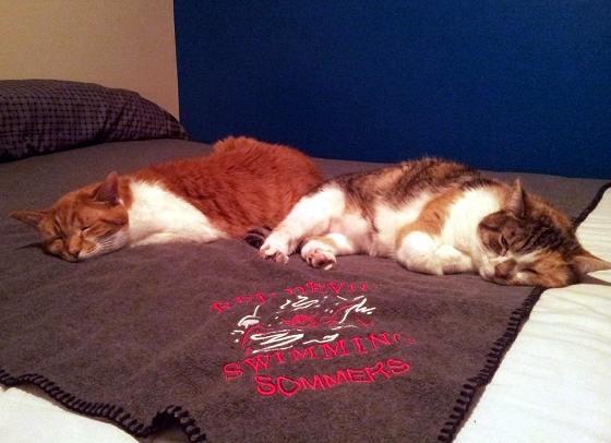 一緒に昼寝する兄弟猫