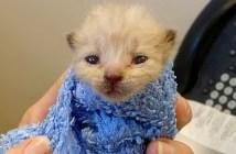 ガソリンスタンドで発見された子猫