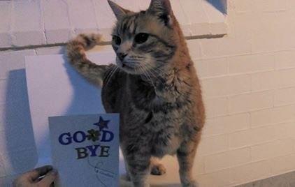 カッコいい猫
