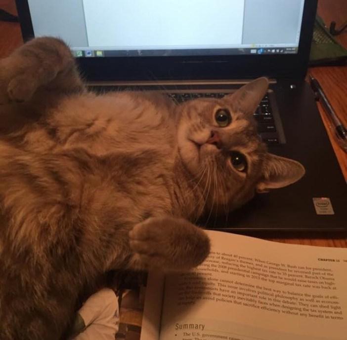 ナデ待ち猫
