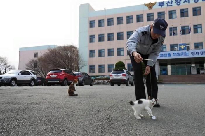 猫と遊ぶ警察官