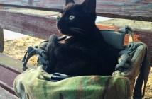 ヘルメットに座る猫
