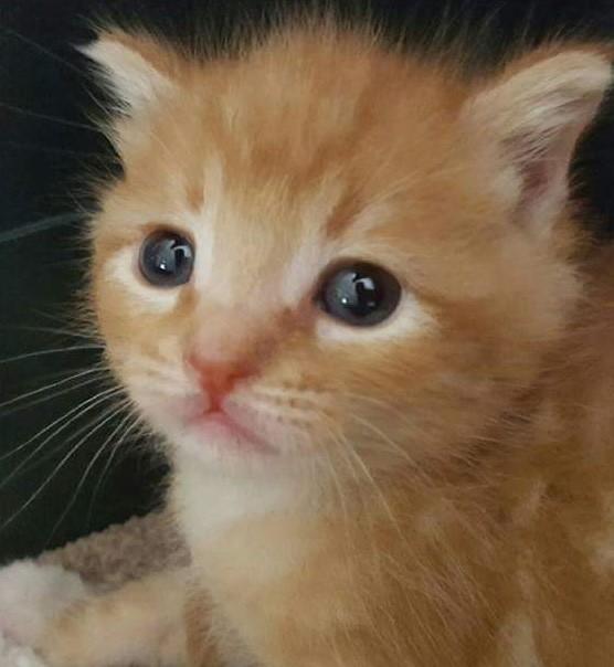 いい顔している子猫