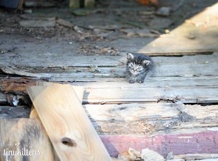 訪ねてきた子猫