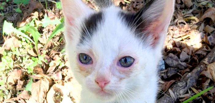 目がボロボロだった子猫