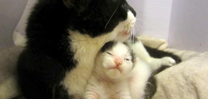 母猫に愛される子猫