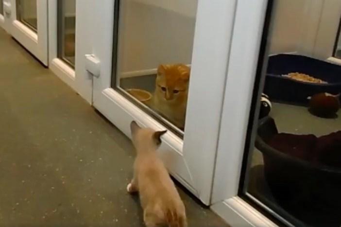 お散歩子猫