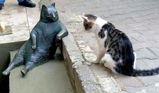 銅像を見る猫