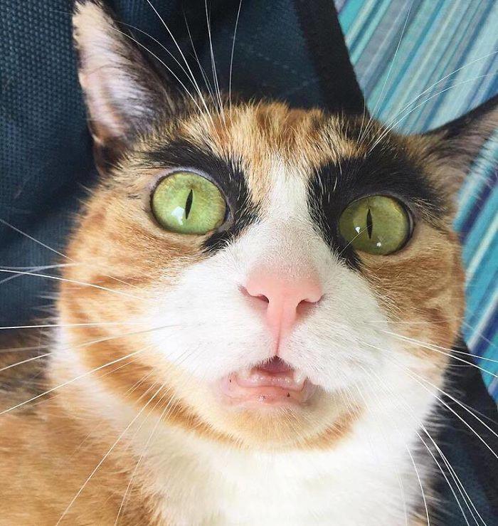 眉毛の太い猫