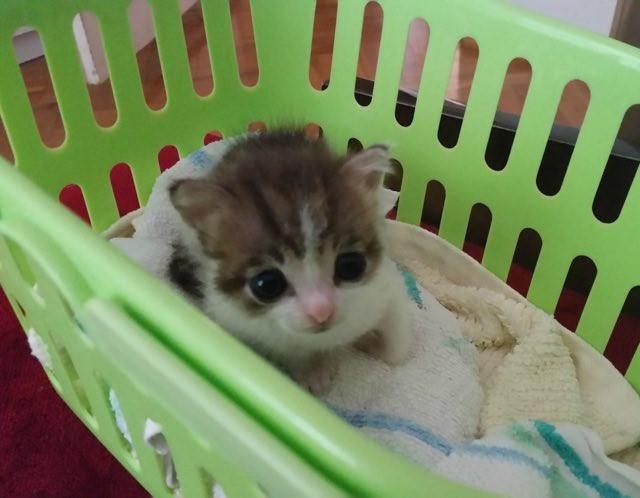 カゴの中の子猫