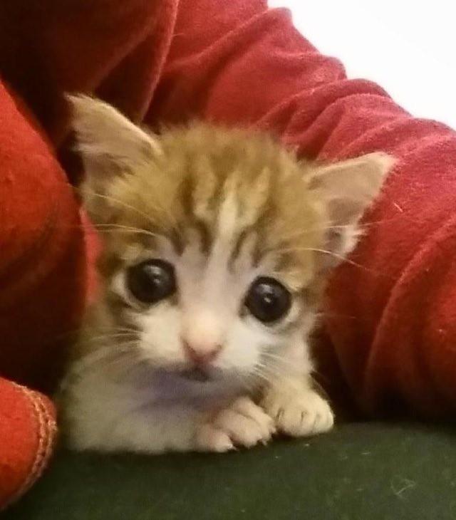 キュートな子猫