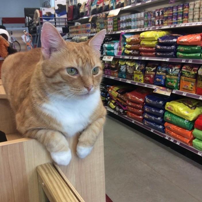 お店の中にいる猫