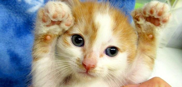 指の多い子猫