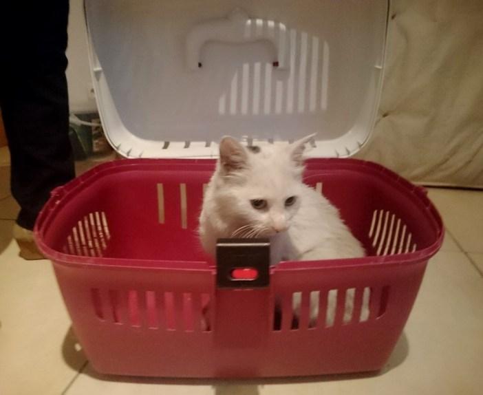ケースの中の猫