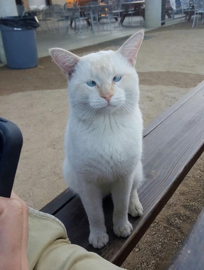 フードコートの猫