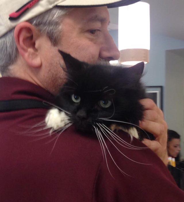 抱っこされる老猫