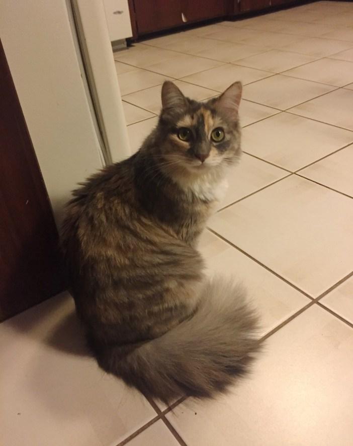 大きくなった猫