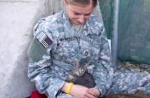兵士と子猫