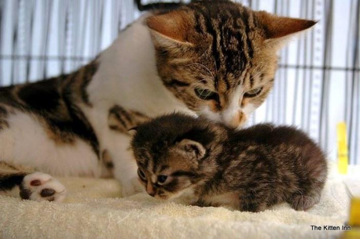 先住猫と子猫