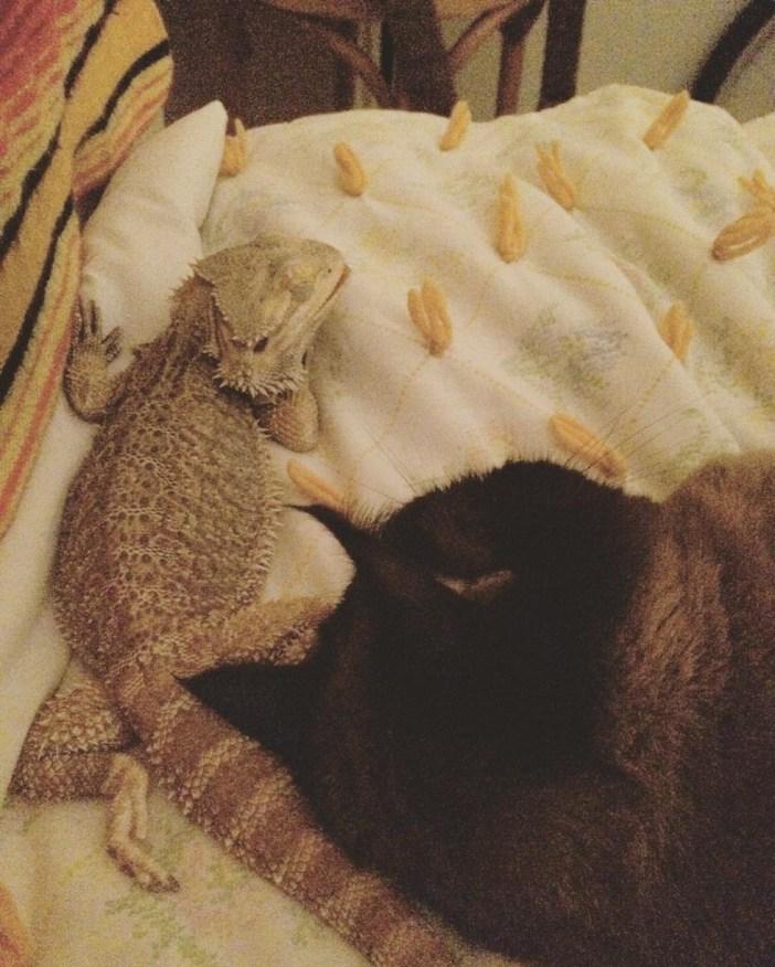 幸せそうなトカゲと猫