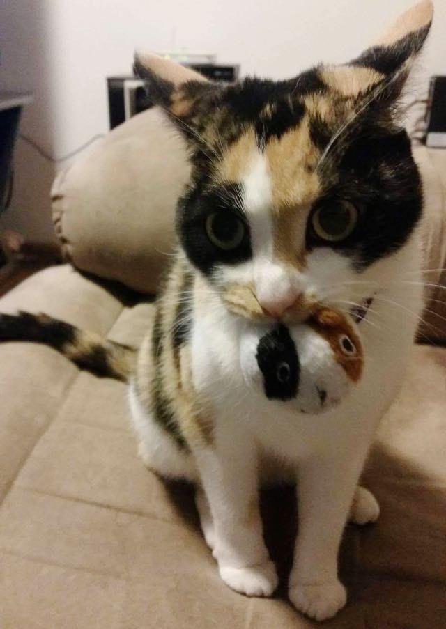 オモチャを咥える猫