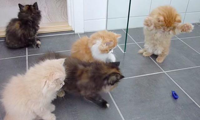 オモチャが気になる子猫
