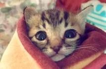 巻かれた子猫