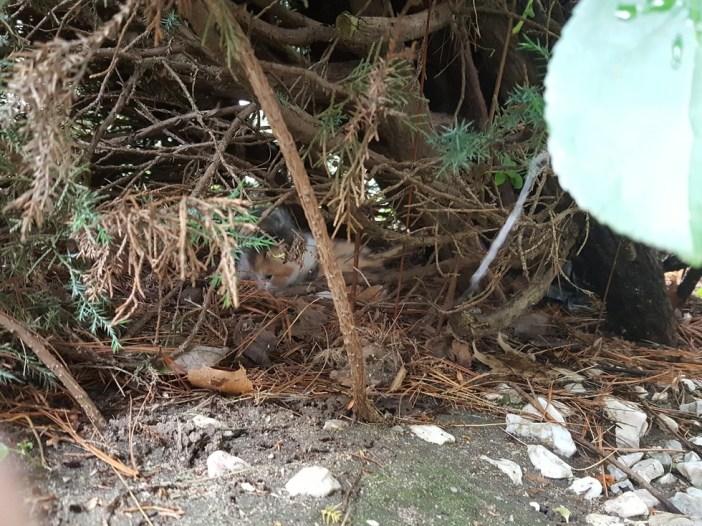 藪の中の子猫