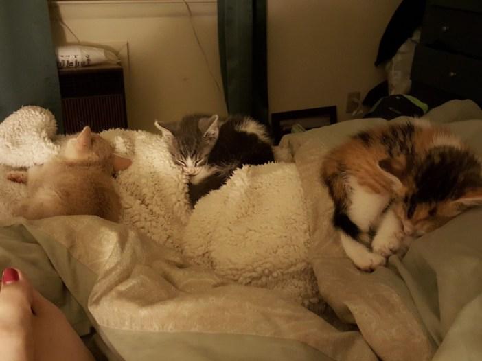 眠る子猫達