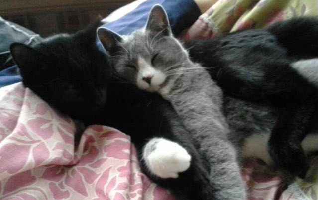 ガシッとして眠る猫