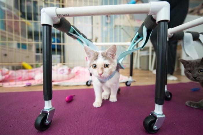 歩く練習の子猫