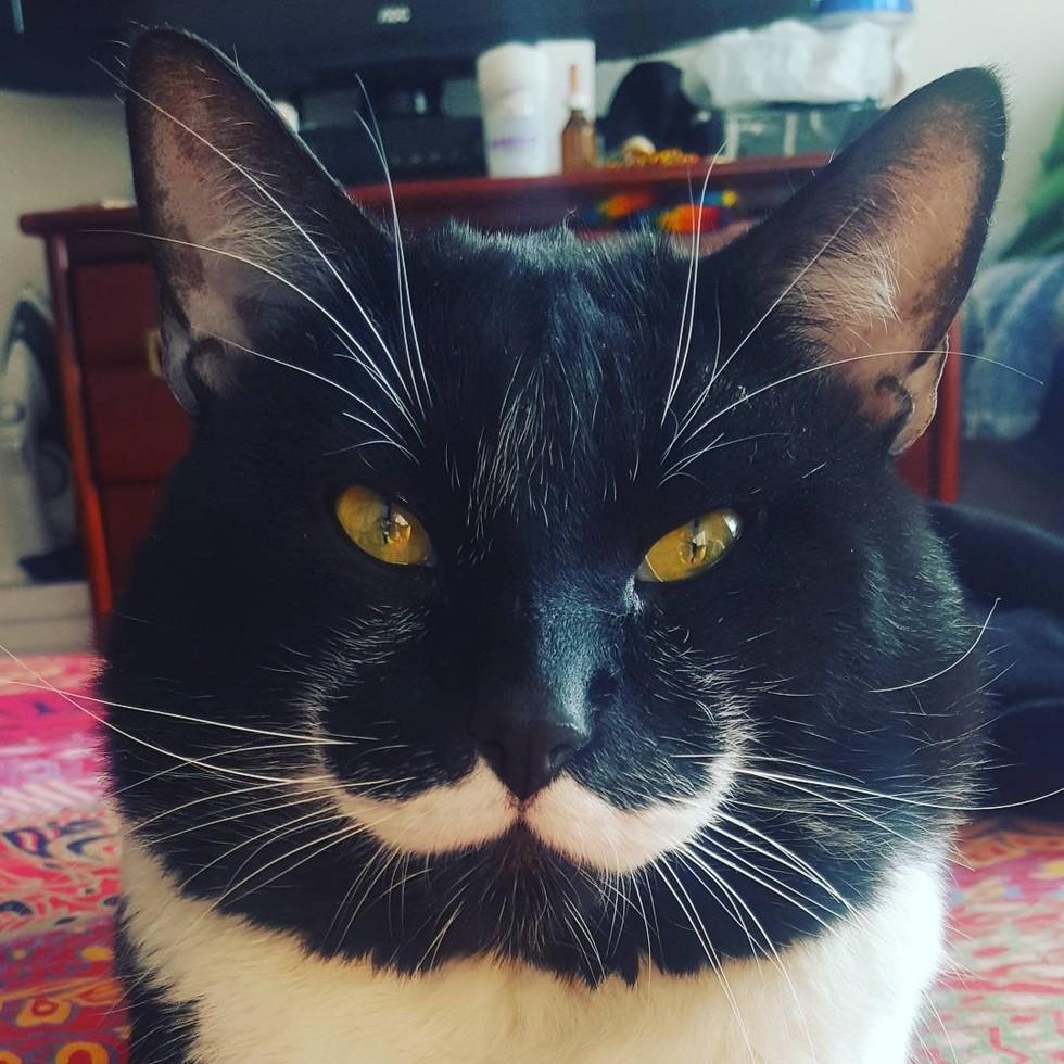 物陰から出てこなかった保護猫。1人の男性の優しさで、口髭の似合う素敵な紳士に生まれ変わる! (9枚)