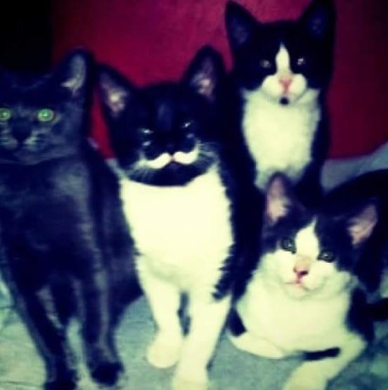 見つめる猫達