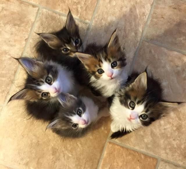 見上げる子猫達